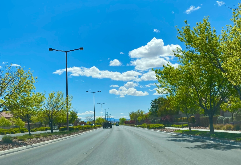 Road with budding trees